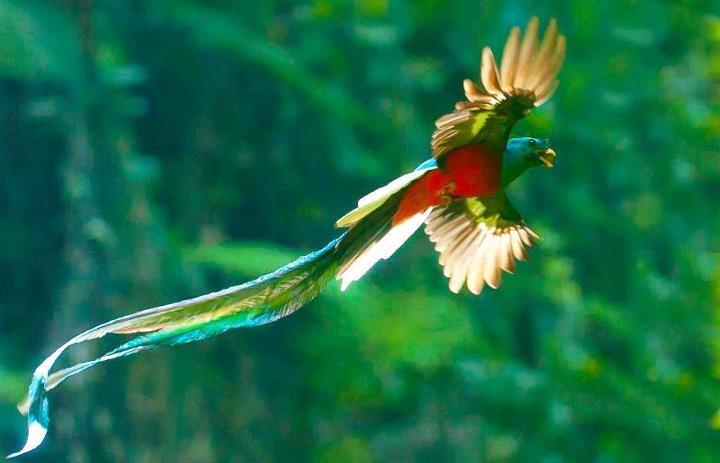 el-quetzal3